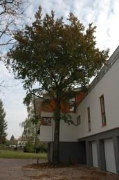Výstavba bytového domu  – Viladům Kluky Hradec Králové 004